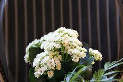 Gros-plan-fleur-deco-chambre-bl