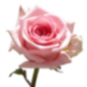 globalrose-flower-bouquets-50-birthday-p
