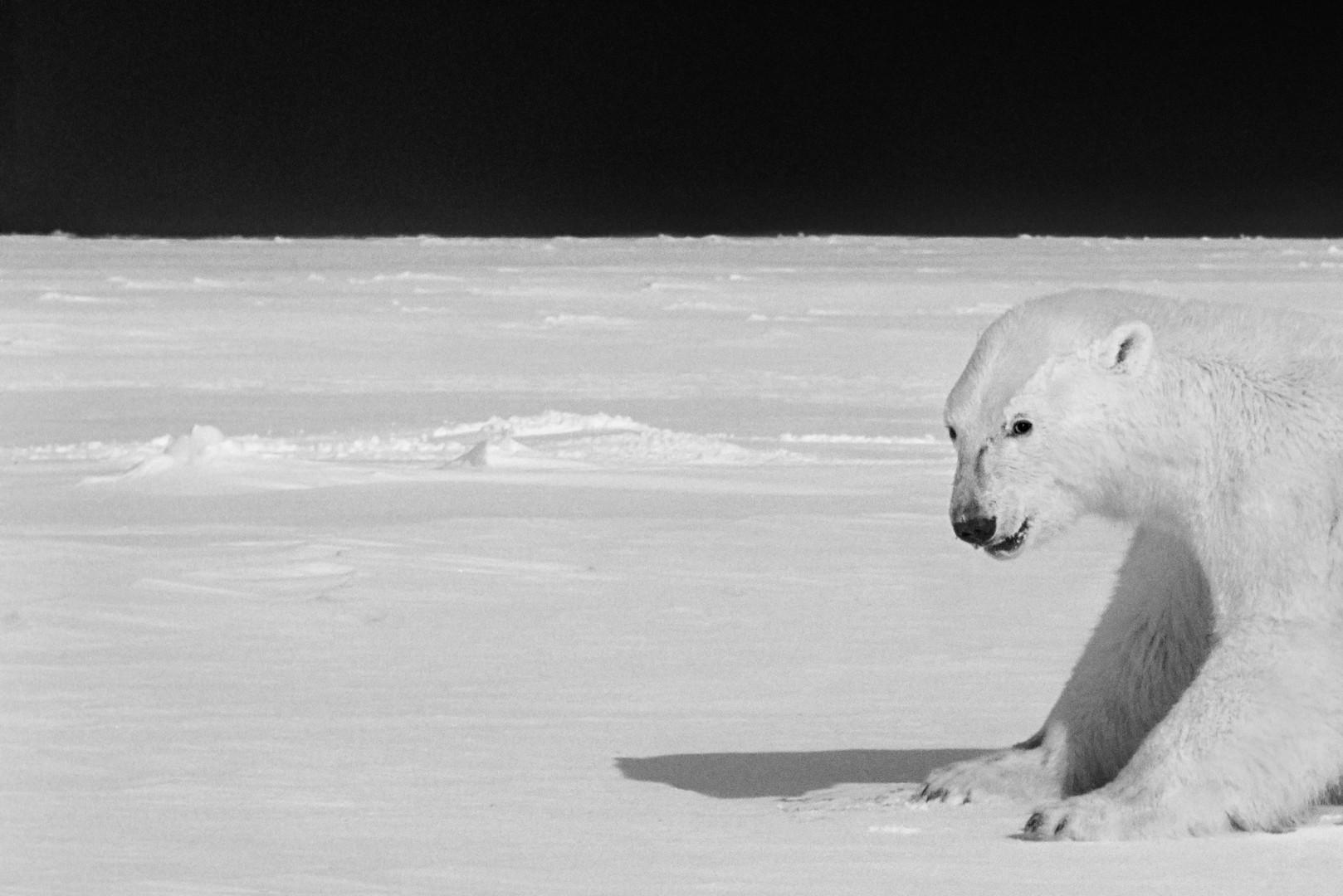北极英雄:世界融化 | 拉格纳·阿克塞尔森 | 2020