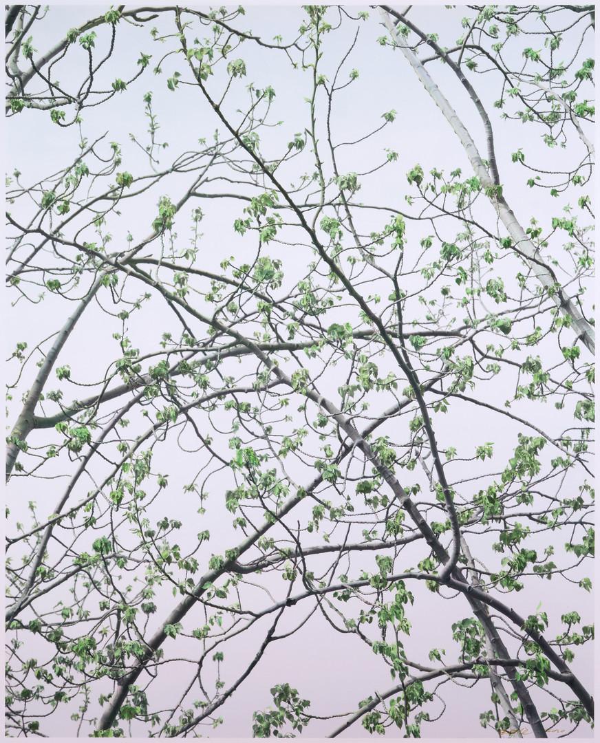 初春的杨树   史国威   2020