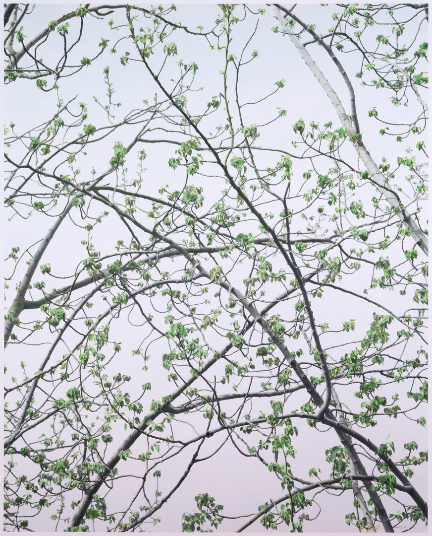 Early Spring Polar Tree | Shi Guowei | 2020