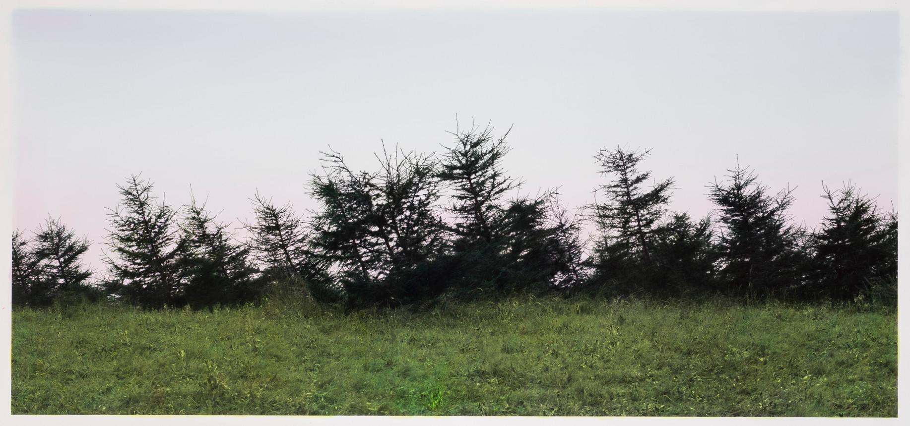 倾斜的树林   史国威   2016