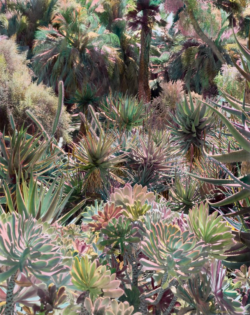 Succulents Paradise | Shi Guowei | 2020