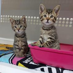 Fanta et Schweppes (chatons)