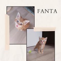 Fanta (chaton)