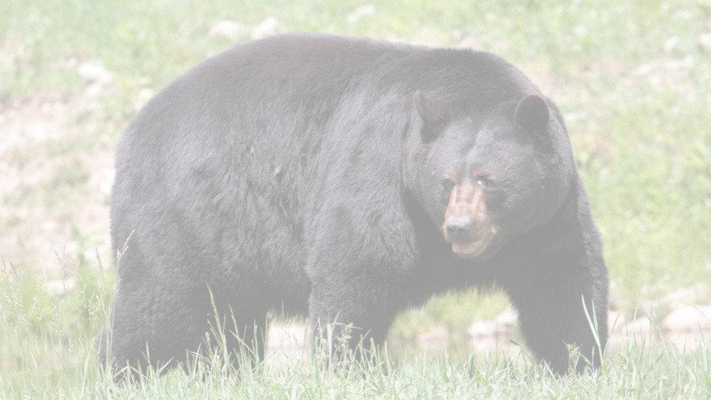 blackbear-1024x576_edited.jpg