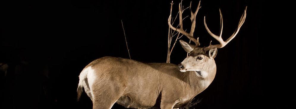 mule deer web header-Monster-Mule-Deer.j