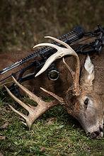 Big Buck 4.jpg