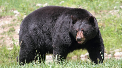 blackbear-1024x576.jpg