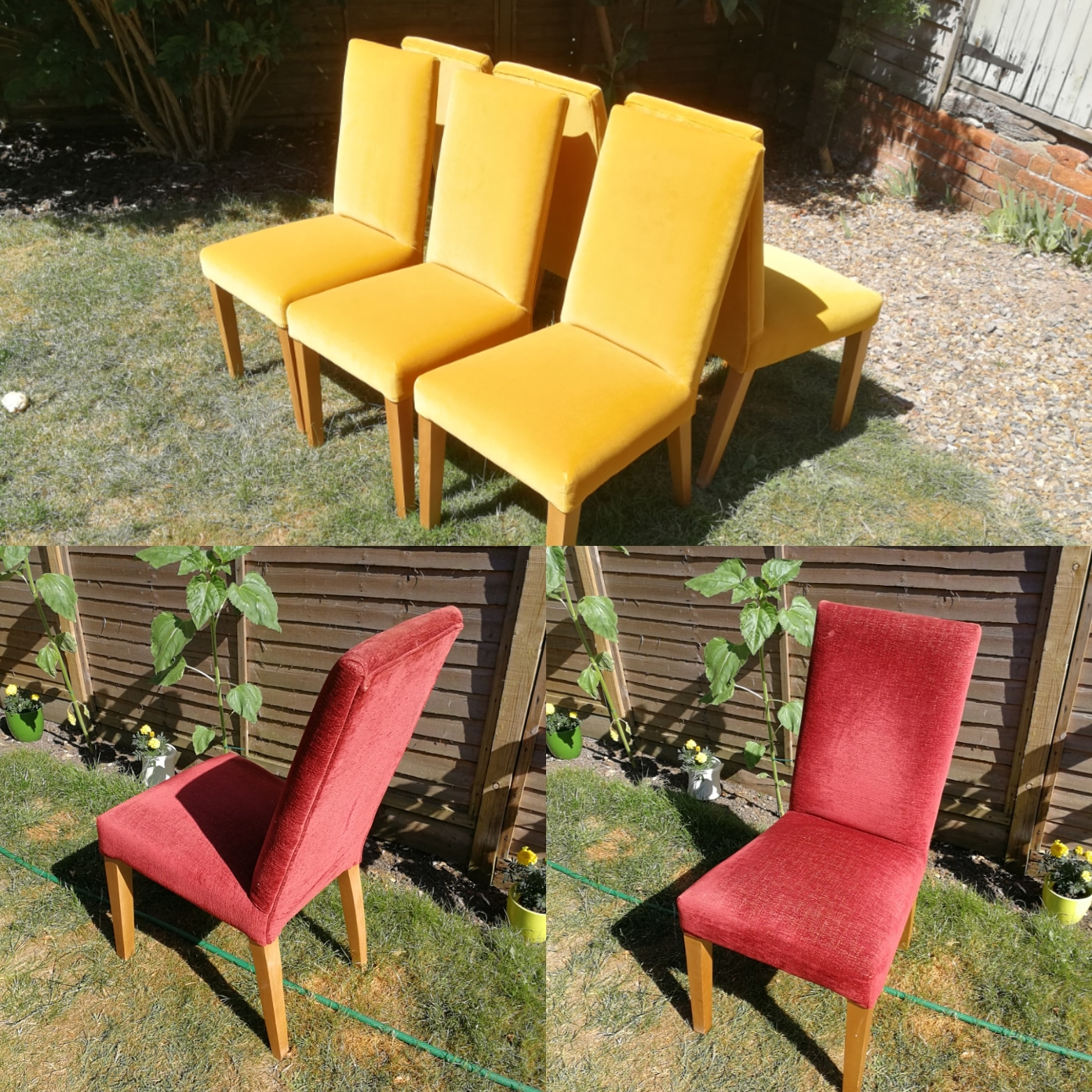 Dining Chairs mustard velvet