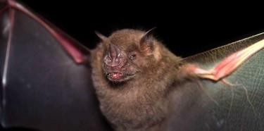 Programa de Conservación de Murciélagos de Puerto Rico (PCMPR)en Las Cabachuelas