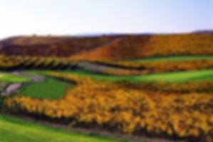 Napa_Valley_Golf.jpg