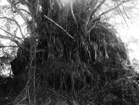 Uma árvore em Angola