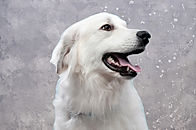 Dog's%2520Portrait_edited_edited.jpg