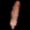 plume 5