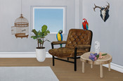 A room with parrots in it 3