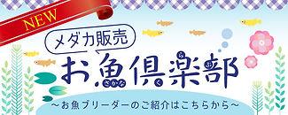 HPお魚倶楽部バナー.jpg