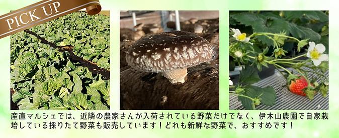 HPデザイン-イチオシ野菜.png