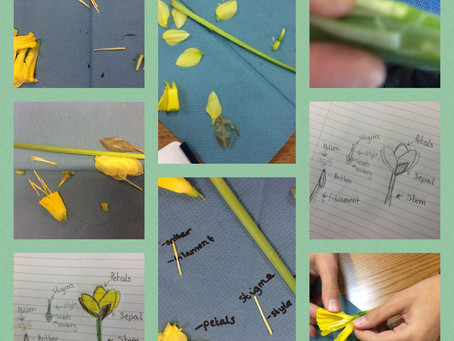 Identifying and naming parts of a flower