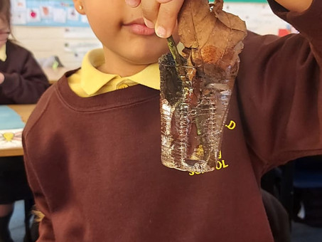 Year 2 had fun making their natural ice lollies in the forest area