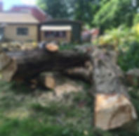 Tree surgery Hastings Tree surgery Bexhill tree surgery Eastbourne Tree surgery Sussex Fencin Hastings Fncing Bexhill Fencng Eastboure Fencing Rye Fencing Sussex