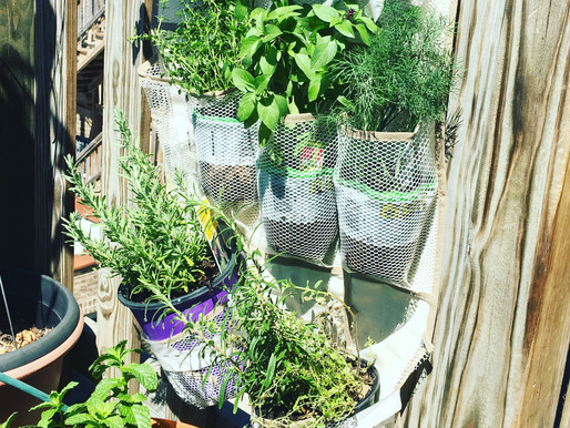 DIY - New Idea for Outdoor Planting