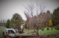 Zuks Tree Moving Private Residence 6