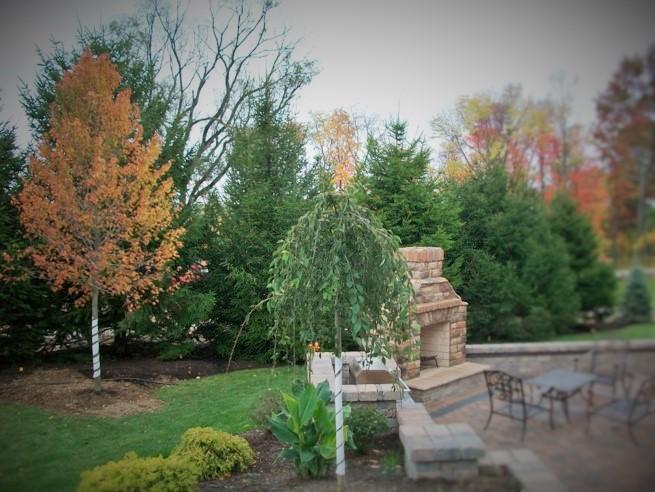 Zuks Tree Moving Private Residence 3