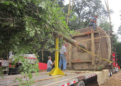 Day in Life of Large Tree Mover - 15