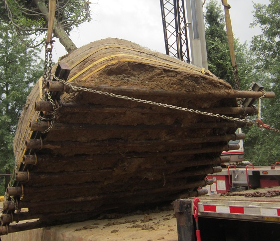 Day in Life of Large Tree Mover - 8