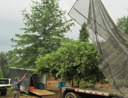 Day in Life of Large Tree Mover - 16