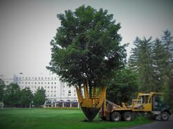 Zuks Tree Moving Greenbriar 3