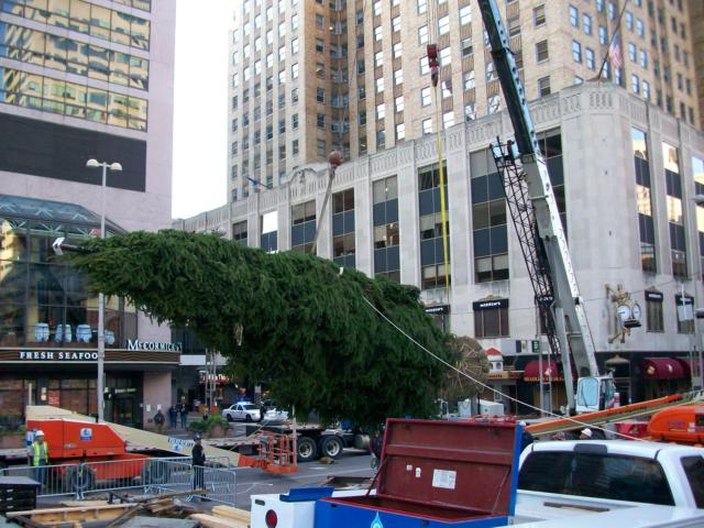 Zuks Tree Moving Cincinnati Spruce