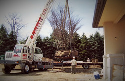 Zuks Tree Moving Private Residence10