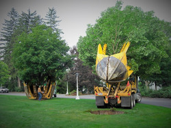 Zuks Tree Moving Greenbriar 6
