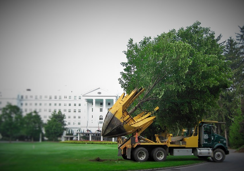 Zuks Tree Moving Greenbriar 5