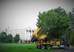 Zuks Tree Moving Greenbriar 5