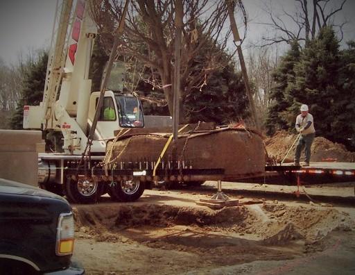 Zuks Tree Moving Private Residence 7