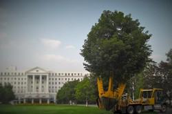 Zuks Tree Moving Greenbriar 4