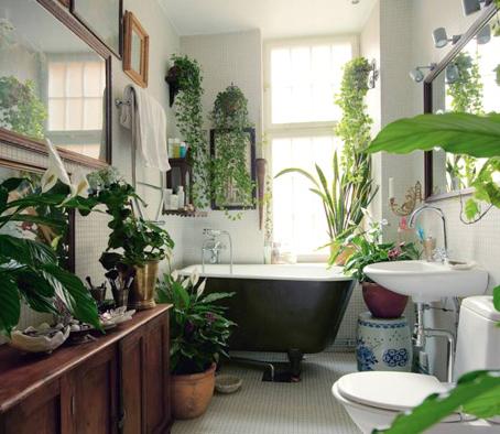 TOP 5 loại cây giúp khử mùi trong không gian phòng tắm của bạn