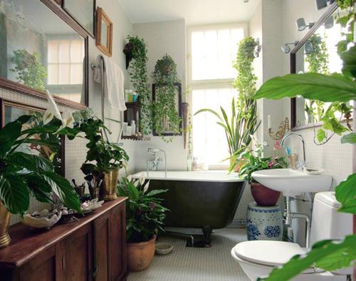 Top 5 cây khử mùi trong phòng tắm