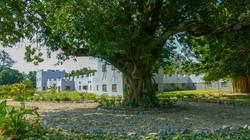Kachere Swing Tree