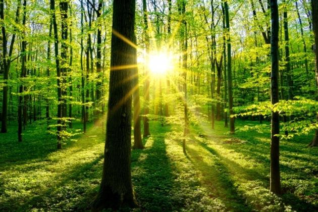 luz do sol.jpg