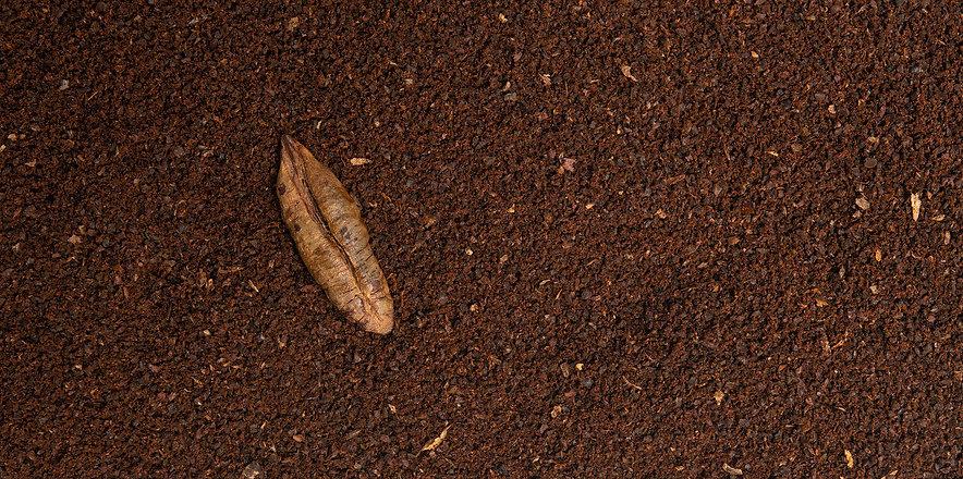 dafe date seed coffee ground.jpg
