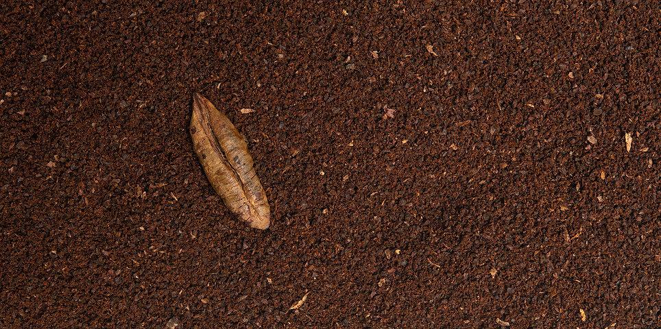 dafe seed ground4.jpg