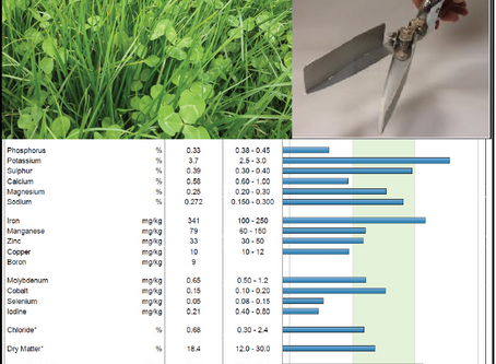 3 Good Reasons Why You Should Take a Summer Pasture Sample