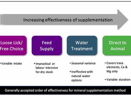 Free Choice Mineral Supplementation – Self Medication or Lost Opportunity?