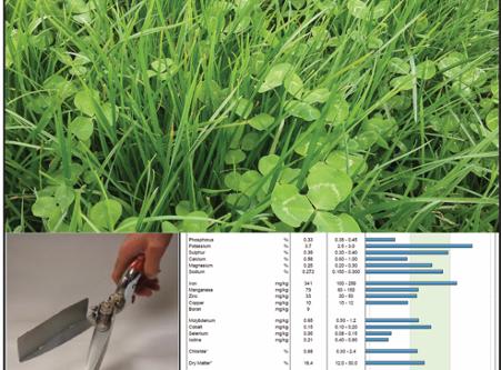 Sulphur Fertiliser – Unsung Hero or Unintended Foe?