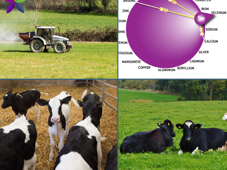 Linking Retained Membranes, Milk Fever & Minerals