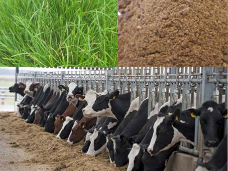 The Power of Calving Date